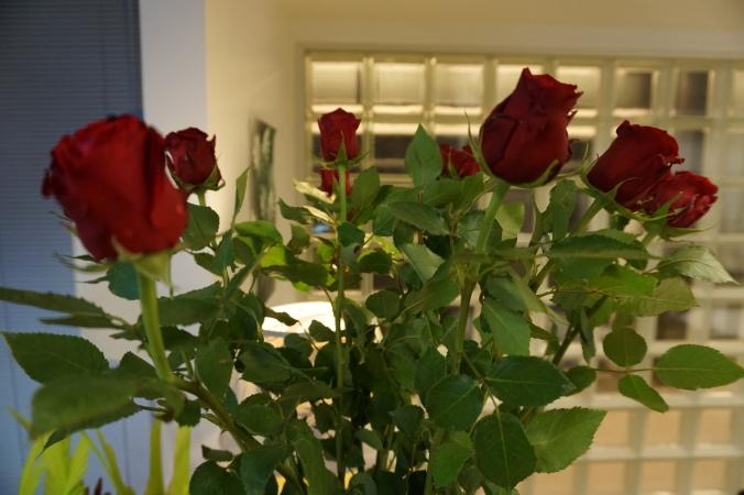 2-punaiset-ruusut